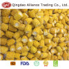 Export Standard Frozen Sweet Corn Cobs