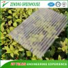 Double/Three Layers Polycarbonate Sheet Covered Greenhouse for Hydroponics Cultivation