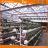 High Output Polycarbonate Sheet Multi-Span Greenhouse