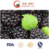 Export Quality IQF Frozen Blackberry and Frozen Fruits