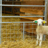 Galvanized Lamb Fence Panel Sheep Hurdle with Mesh