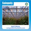 The Cheapest Glass Multi-Span Greenhouse for Sale