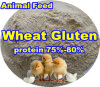 Wheat Protein Powder (75% 80%) for Animal Feed