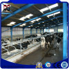 Professional Supplier Prefab Construction Building Materials for Cattle Farm House