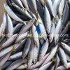 Landfrozen 80-120g Round Scad Frozen Pacific Mackerel