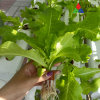 Professional Multi-Span Tunnel/Arch Type PE/Po Film Plastic Agricultural/ Commercial Eco Greenhouse for Tomato/Cucumber Strawberry Hydroponics Growing / Poultry