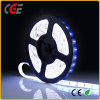 DC12V/24V Ce Approved Flexible LED Strip Light LED Strip Lamp Low Price