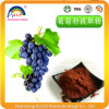 Plant Extract Grape Seed Extract for Skin Care