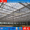 Glass and PC Sheet Venlo Green House Manufacturer for Exporting