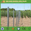 Weinbergpfahl/ Poles for Vineyard for Germany