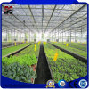 Cheapest China Supplier Venlo Agricultural Glass Green House