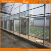 Modern Design Po Film Multi-Span Greenhouse