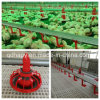 Poultry Farm Machinery for Broiler Chicken Production