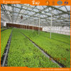 High Quality Long Life Span Polycarbonate Multi-Span Greenhouse