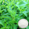 Stevia Leaf Extract Power Stevioside 95%