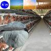 Il pollame alimenta (anatra, bestiame, pollo, cane, pesci, cavallo, maiale)