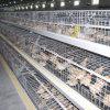 Kooi van de Apparatuur van het Landbouwbedrijf van het gevogelte de Automatische voor de Kip van de Jonge kip van de Grill van de Laag
