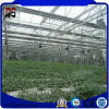 Múltiple de alta calidad de cristal personalizado Span/Plástico/PC de efecto invernadero hoja
