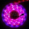 Luz de tira larga de la vida útil SMD 5050 LED con alto lumen