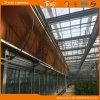 식물성 설치를 위한 Venlo 구조 유리제 온실