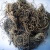 Estratto della radice della valeriana dell'estratto della valeriana