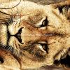 100%Polyester 3D de starende blik verspreidt Afgedrukte Stof voor de Reeks van het Beddegoed