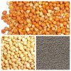 2013 Crop Red (yellow/green) Millet in Husk (JD07)