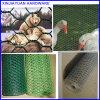Collegare della gabbia di pollo che recinta il reticolato esagonale della rete metallica