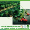 Tessuto non tessuto di Spunbonded di prezzi bassi per il coperchio di agricoltura