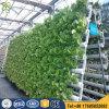 商業Hydroponicsの温室のHydroponicsタワー