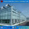 중국 공장 로즈 경작을%s 유리제 Hydroponic 녹색 집