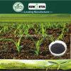 Kingeta contiene efficace il fertilizzante microbico composto basato del fertilizzante del carbonio carbonio