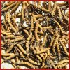Extrait normal de 100% Yarsagumba, extrait de Cordyceps Sinensis (polysaccharides de 10%~40%)