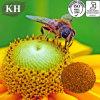 Proteína 100% natural fresca orgânica 15% do pólen da abelha da alta qualidade