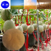 Elemento de traço orgânico Aminoácido Chelato Líquido Fertilizante foliar Aminoácido