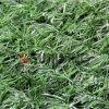 Recinto di plastica del foglio dell'erba artificiale esterna