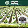 Il carbonio del fertilizzante di conservazione di acqua di Kingeta ha basato il fertilizzante composto NPK 15-15-15