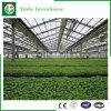 زراعة [ستينلسّ ستيل] فحمات متعدّدة صفح دفيئة