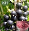 Anti-Oxidiant Schwarze Johannisbeere-Auszug-Anthocyanin 5%