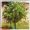 Home와 정원 Decoration를 위한 인공적인 Orange Tree