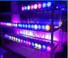 LED 백색 노랗고 또는 빨강 또는 녹색 Blue/RGB 아래로 점화하십시오