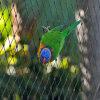 オウム機構の網及び小さい鳥の網