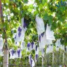 Ткань PP Nonwoven для мешка крышки виноградины плодоовощ