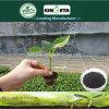 Fertilizzante microbico dello scarificatore dell'agente del carbone di legna di bambù di Kingeta