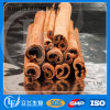 Factory Provided Best Quality Cinnamon Extract
