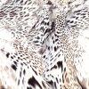 Stof van het Af:drukken van de Perzik van de Wol van de schoonheid de Ontwerp Geweven (tld-060)