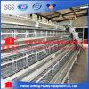 Automático un tipo jaula de la capa del pollo para las granjas avícolas en Argelia