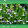 5:1 naturel d'extrait d'herbe d'euphraise de 100%, chromatographie sur couche mince de 10:1