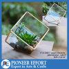 Terrarium di vetro geometrico della pianta decorativa di rame per il supporto della pianta