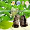 Magnolia normale pure Officinalis de médecine d'herbe de 100%